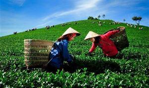 Thương hiệu doanh nghiệp Việt Nam: Sản phẩm tốt nhưng không ai biết đến